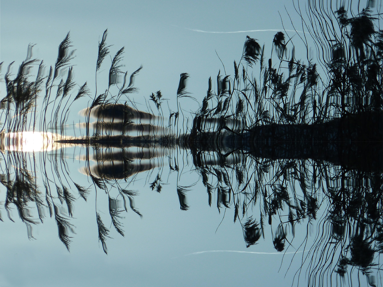 Water reflecting aquatic plant