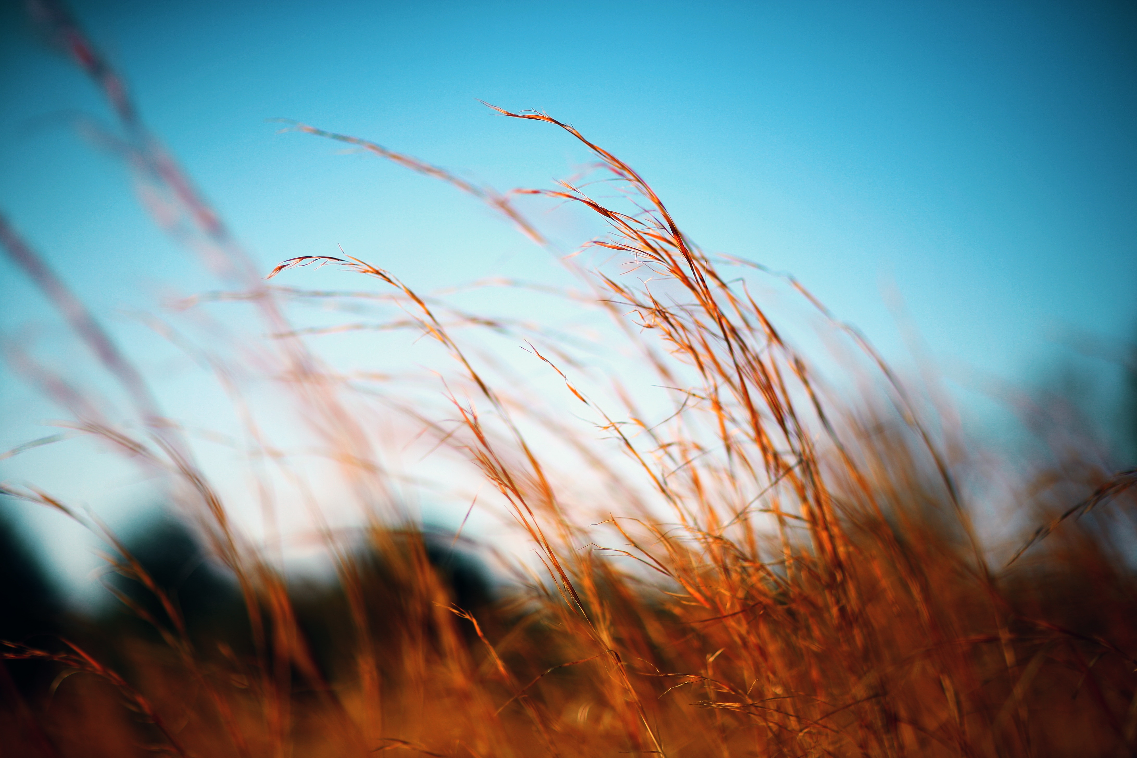 brown grasses against blue sky