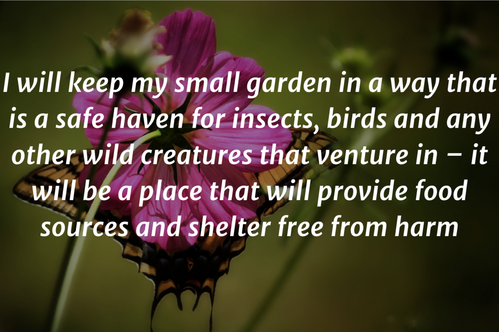 """A photo of a butterfly flying into a purple flower. Text on top: """"I will keep my small garden in a way that is a safe haven for insects, birds and any other wild creatures that venture in - it will be a place that will provide food sources and shelter free from harm"""""""