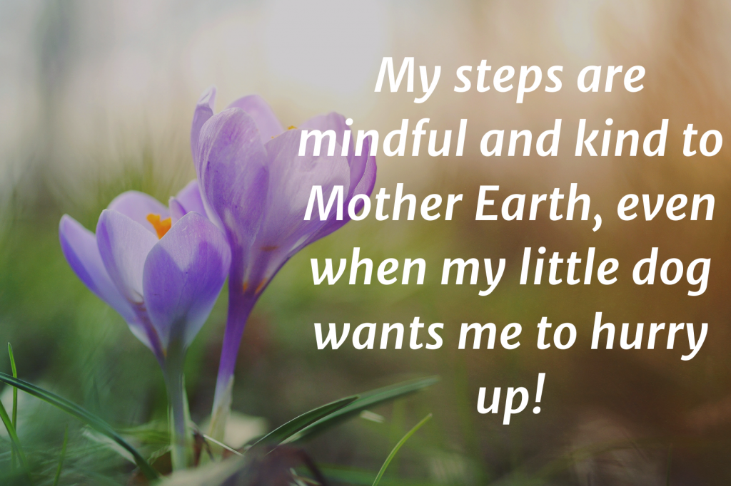 """A closeup photo of two purple crocuses in the sunlight. Text on top: """"My steps are mindful and kind to Mother Earth, even when my little dog wants me to hurry up!"""""""